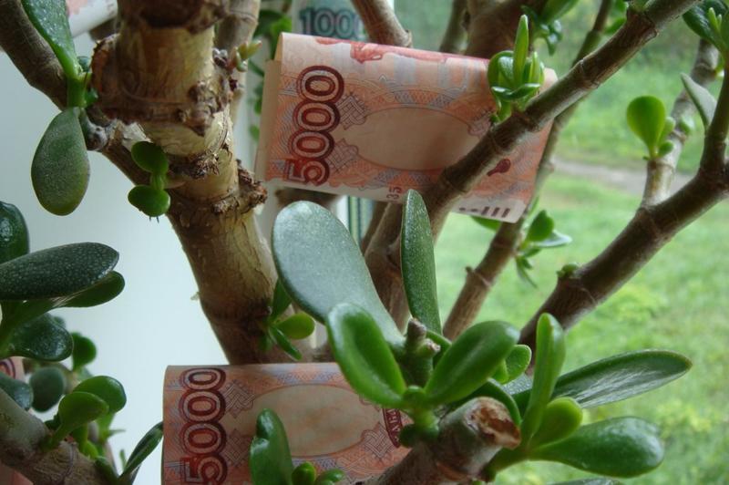 Денежное дерево привлекает деньги в дом