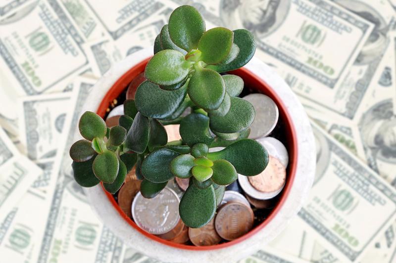 Денежное дерево для привлечения денег 1