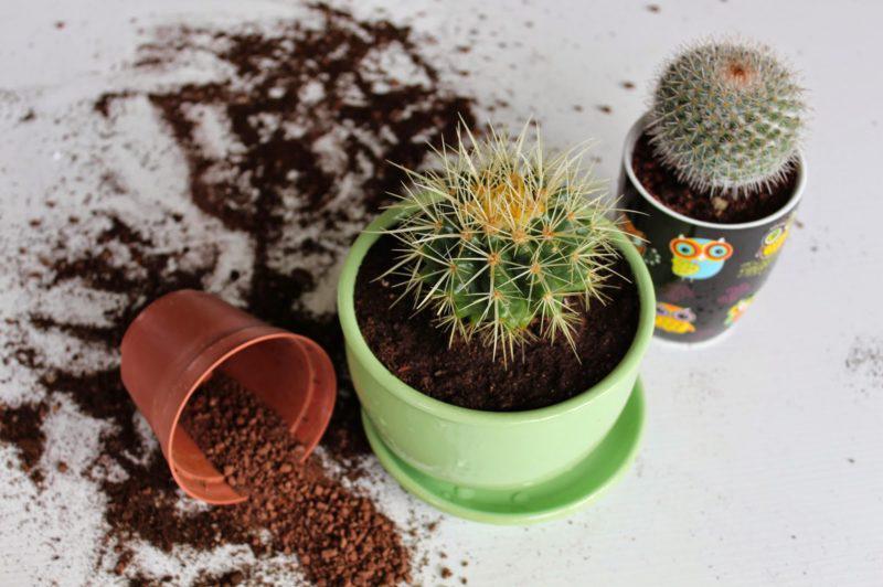 Горшок для кактусов