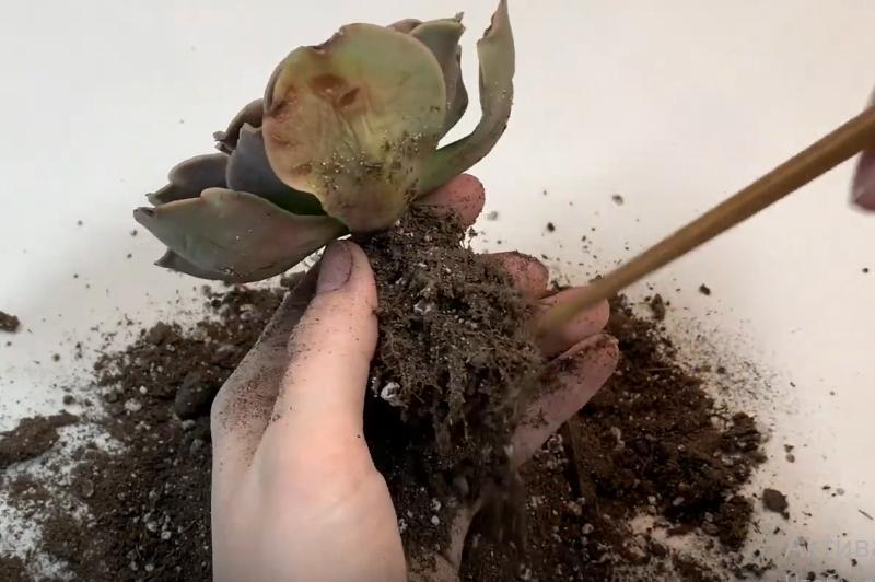 Осмотреть корни