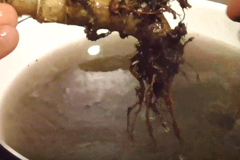 Промыть корни