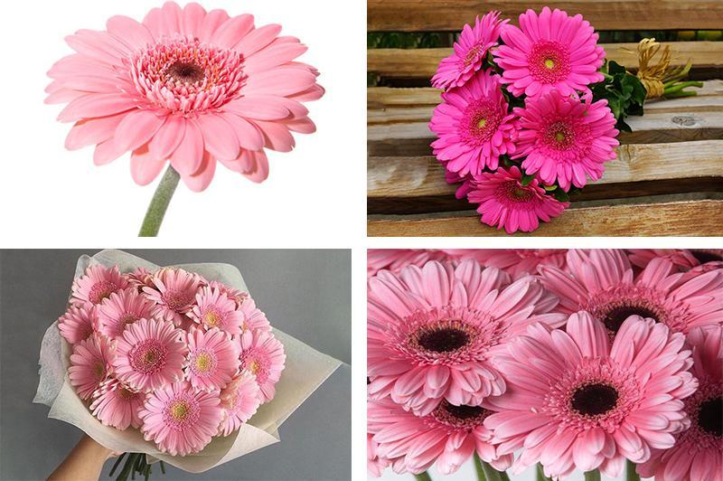 Розовые герберы