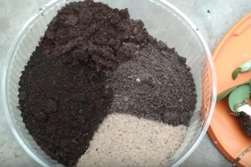 Почва для гемантуса